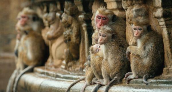 Dokument Království opic