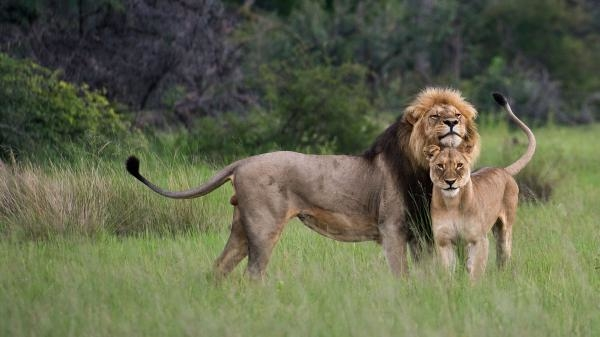 Africké drápy a čelisti