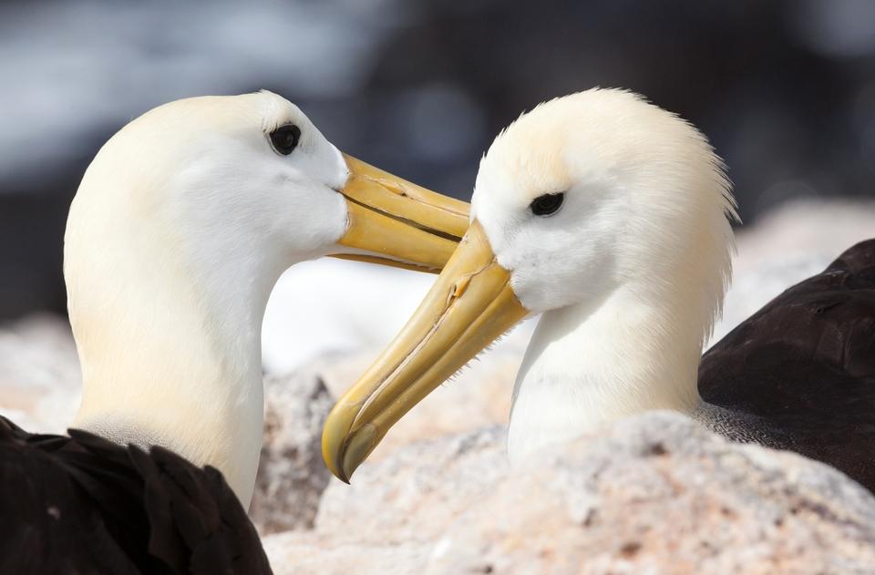 Dokument Krásy divokých Galapág