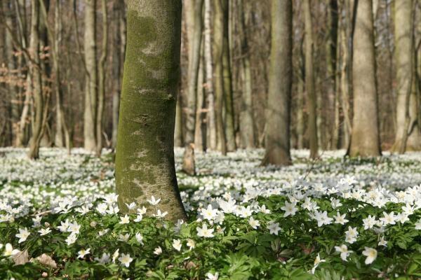 Dokument Zázračné lesy