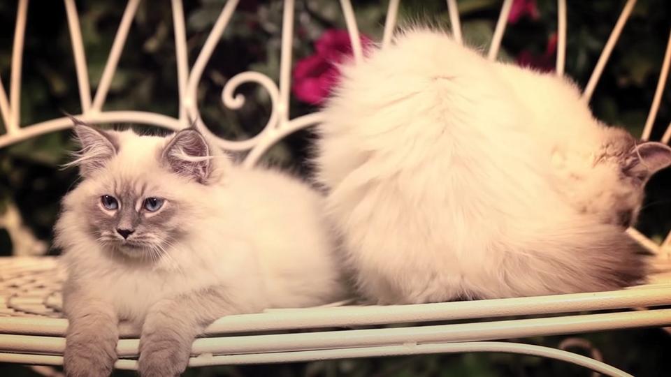 Dokument Planeta koček