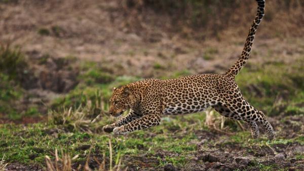 Afričtí lovci
