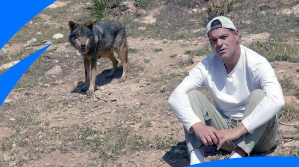 Frank a bojoví psi