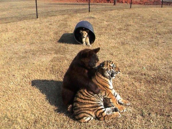 Netradiční zvířecí přátelství