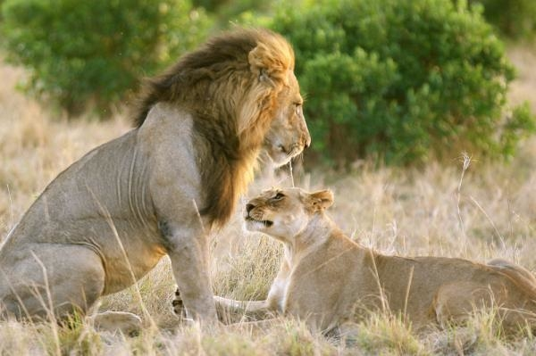 Láska v přírodě