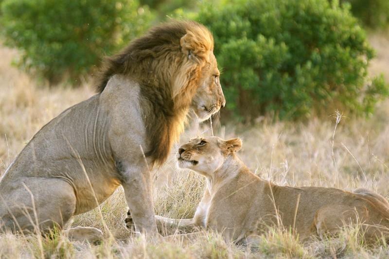 Dokument Láska v přírodě