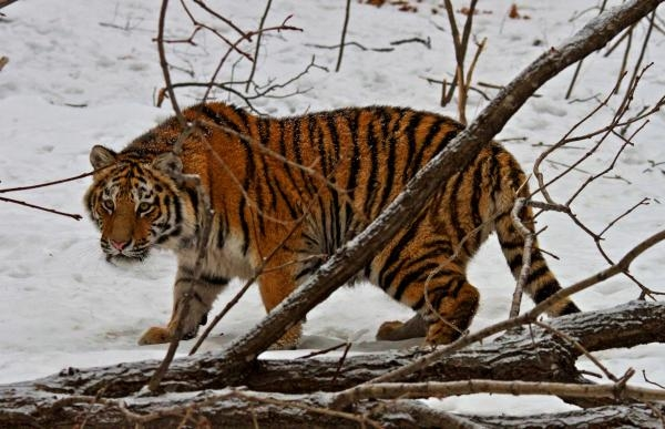 Amur: Asijská Amazonka