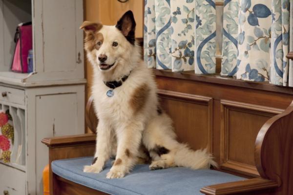 Pes a jeho blog