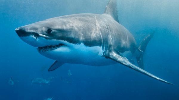 Když žraloci útočí