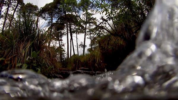 Dokument Metamorfóza: Zázrak přírody