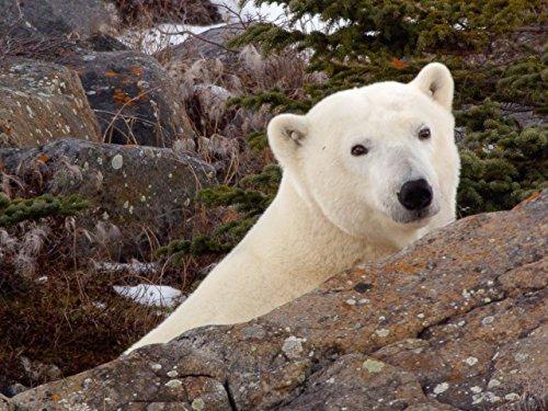 Tajemství Arktidy