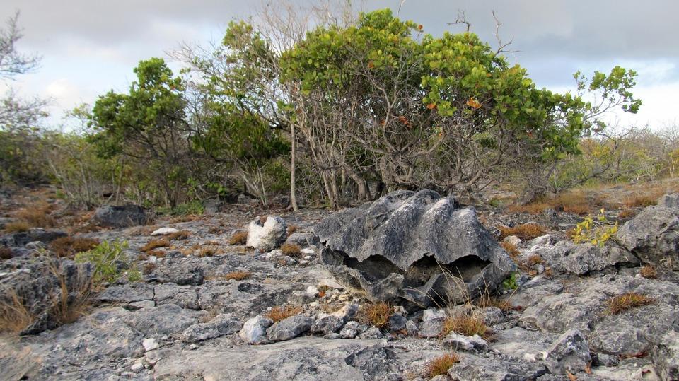 Documentary Aldabra: Byl jednou jeden ostrov