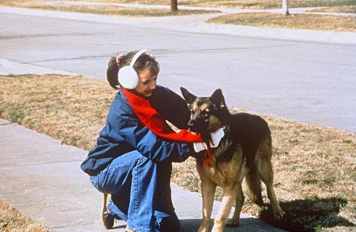 Film Příběh psa