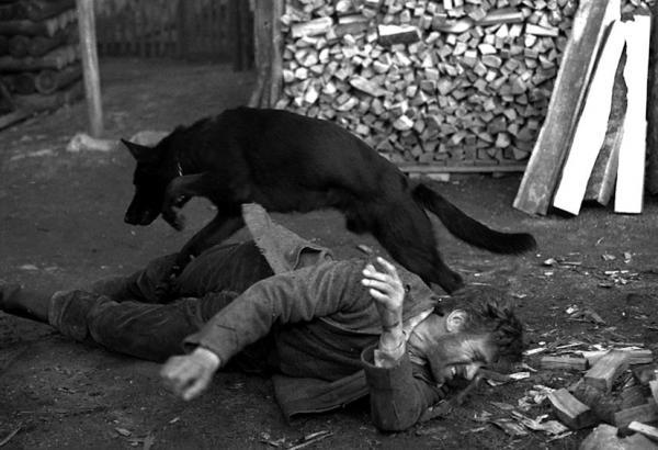 Černý vlk