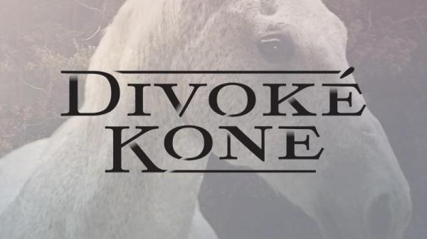 Divoké koně  II (24, 25)