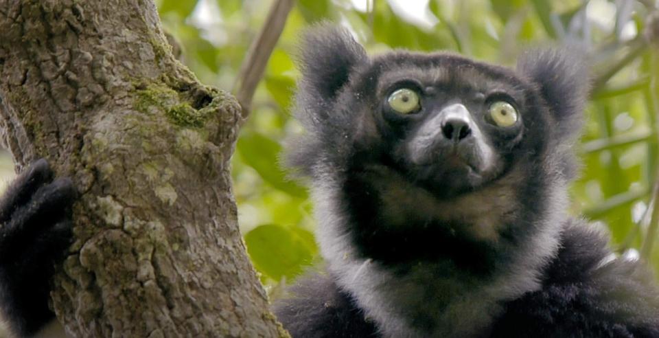 Dokument Tajemství Madagaskaru