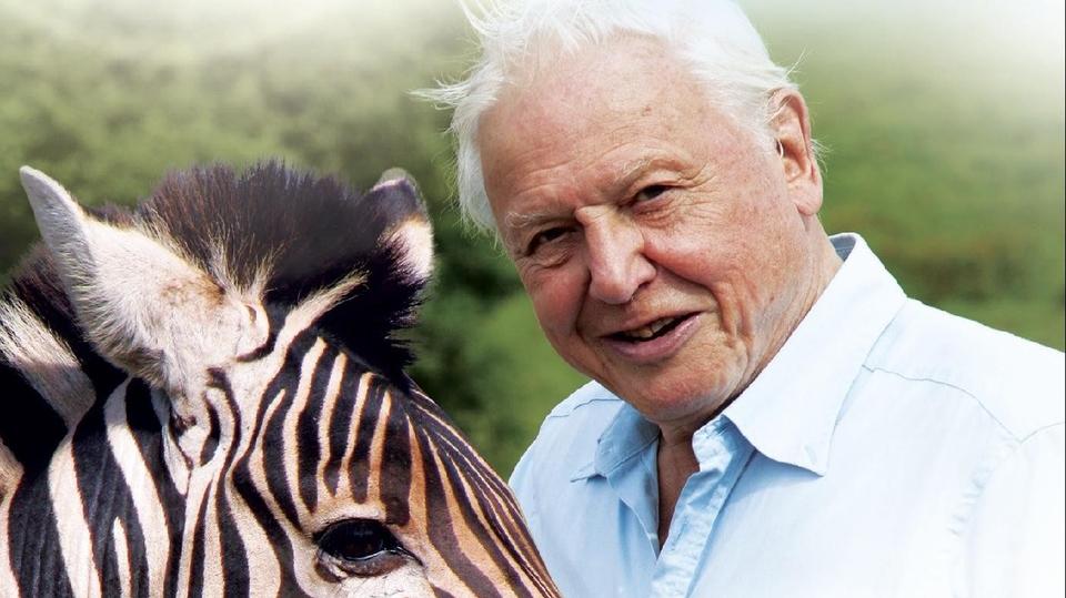 Dokument Přírodní kuriozity Davida Attenborougha