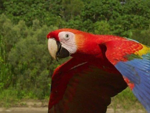 A világ madárszemmel  (4)