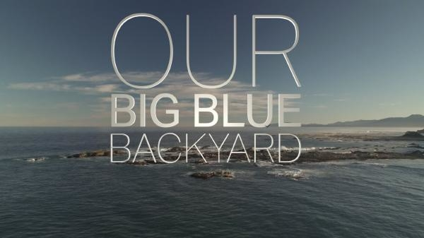 Sleduj online dokument Our Big Blue Backyard: New Zealand na TVP1!