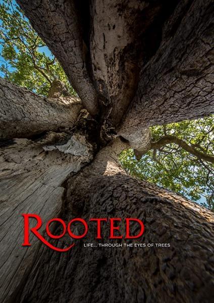 Dokument Příběh pěti stromů