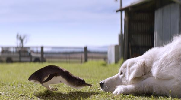 obrázek k pořadu Chlupáč Oddy a tučňáci