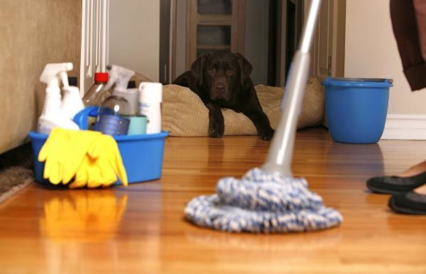 Najšpinavšie domácnosti / Veľké upratovanie  X (2)