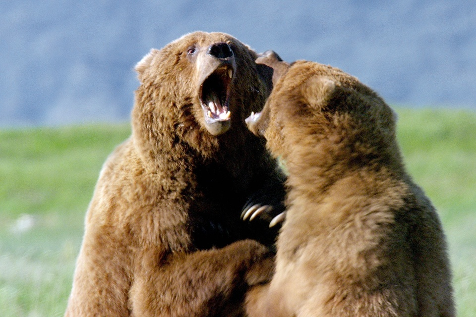 Dokument Setkání s grizzlym