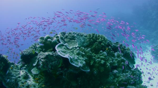 Dokument Divy Velkého bariérového útesu