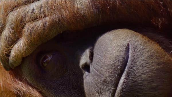 Dokument Jak spí zvířata v přírodě