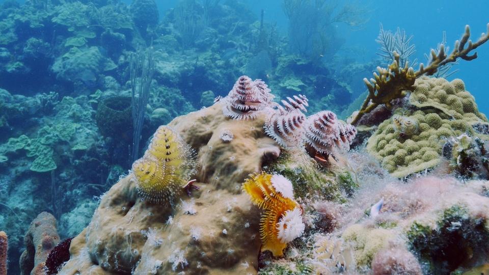 Dokument Mořské parky
