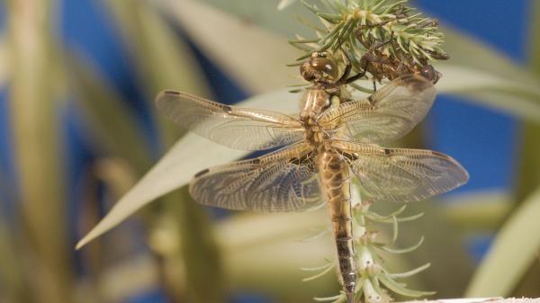 Dokument Návrat přírody do Porúří