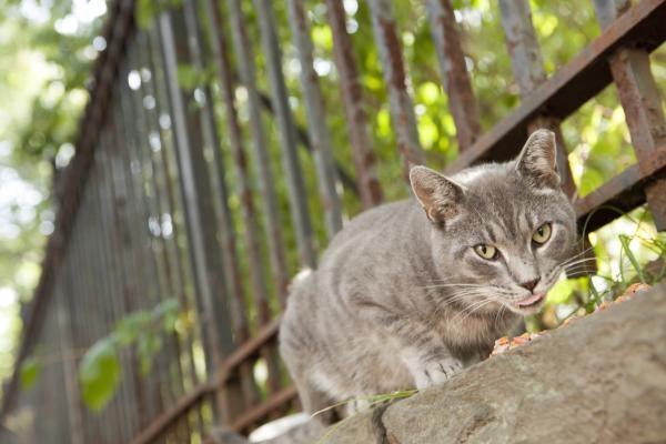 Kočičí svět