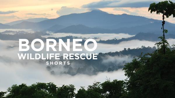 Dokument Ochránci divočiny na Borneu