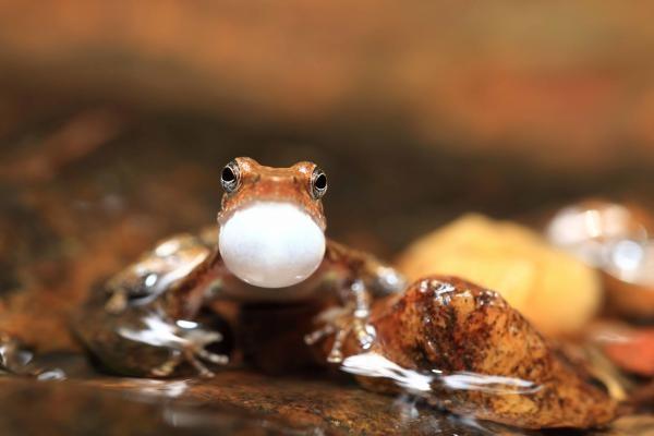 Tajemný život žab