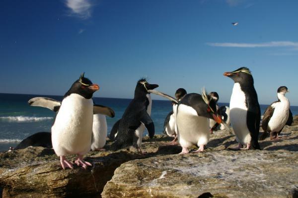 Dokument Tučňáci - život z blízka