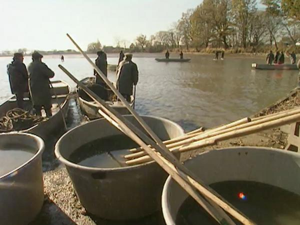 Jak se žije s českou rybou podle Jána Piroha