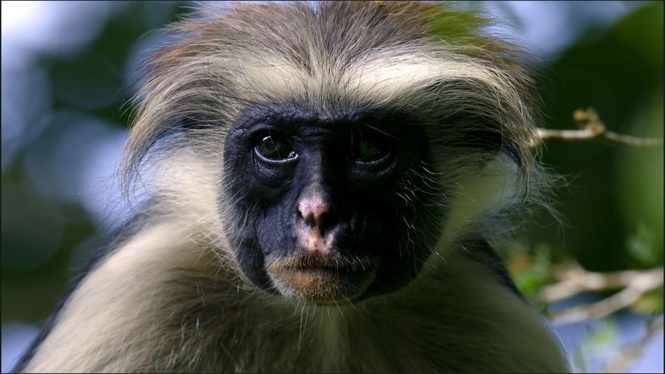 Documentary Země primátů