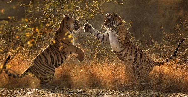 Dokument Poslední cesta tygra jménem Zlomený ocas