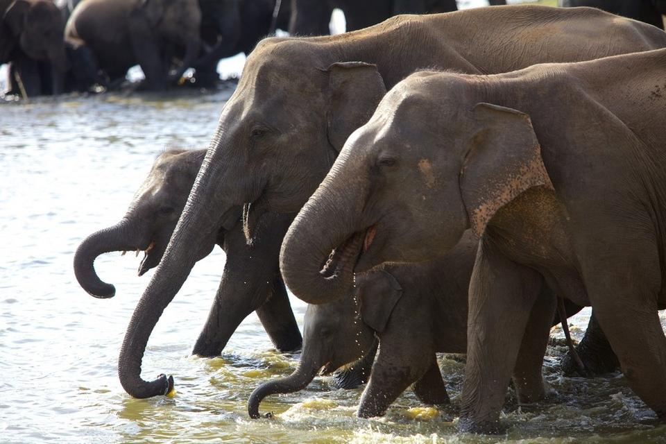 Dokument Divoká Srí Lanka