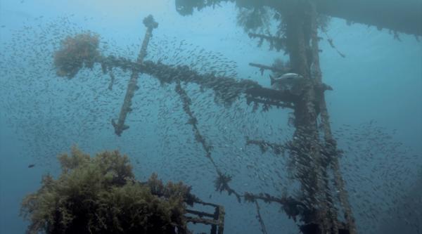 Dokument Rivalové korálových útesů