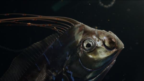 Bájný mořský had – hlístoun