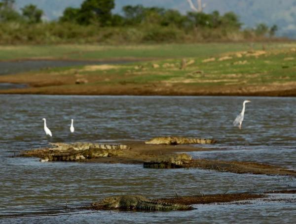 Dokument Šrí Lanka, zářivý ostrov