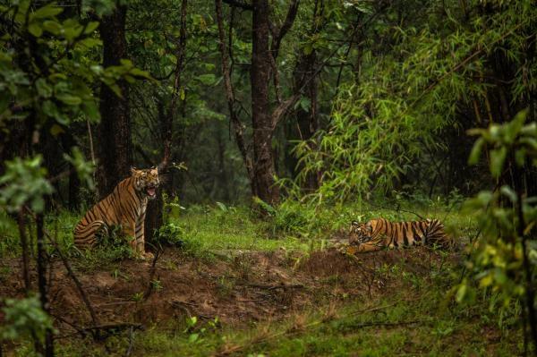 V divočině Indie