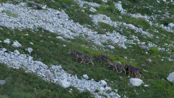 Dokument Údolí vlků