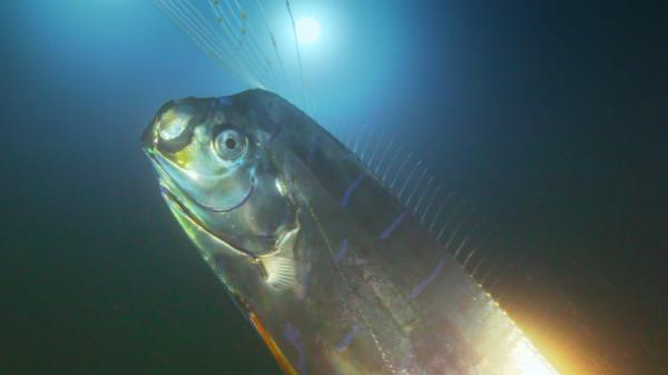 Divovska morska zmija: Susret s mitskom ribom