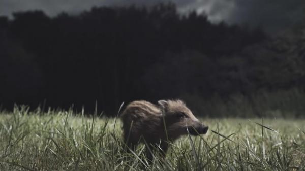 Dokument Noční život zvířat