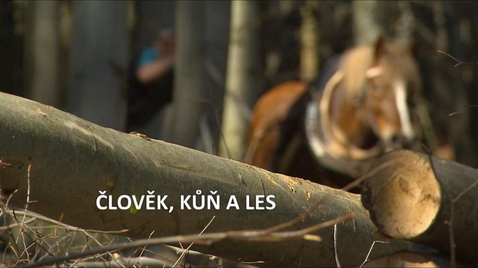 Dokument Člověk, kůň a les