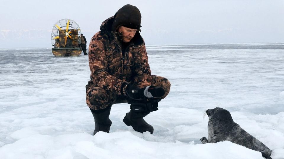 Dokument Vnútrozemské tulene