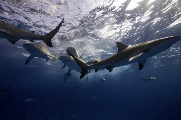 Dokument Putování se žraloky