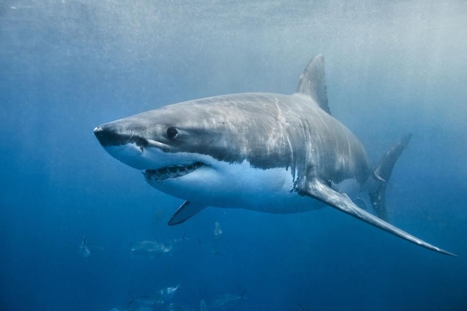 Dokument Žraloci utržení ze řetězu
